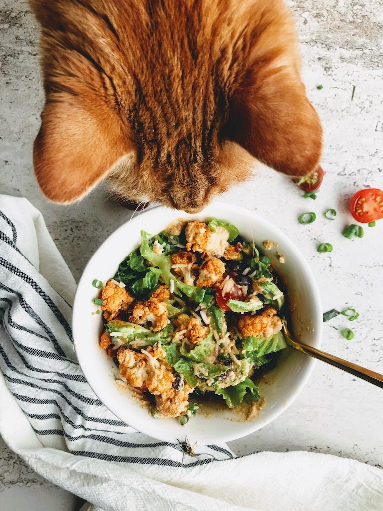 Spicy Taco bowl with Orange Tabby